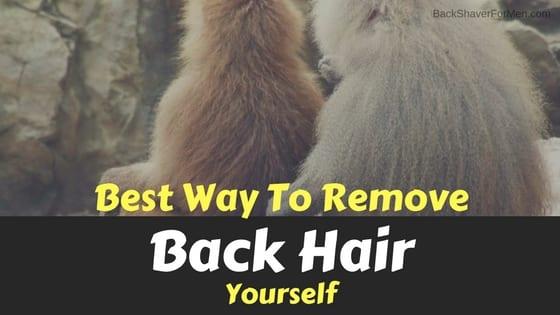 two monkeys back